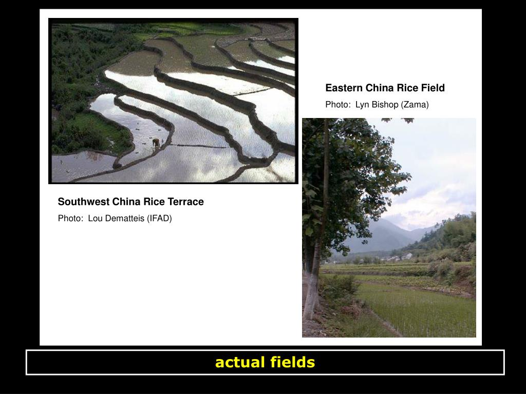 Eastern China Rice Field