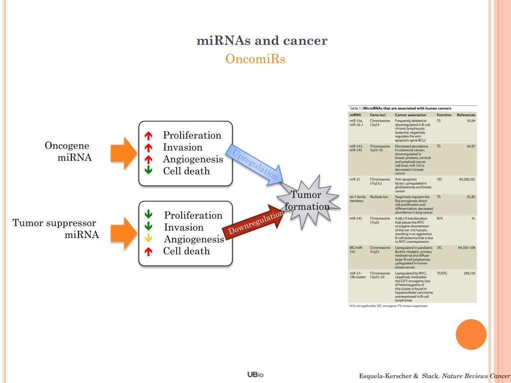 miRNAs and cancer