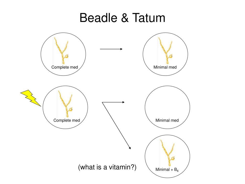 Beadle & Tatum