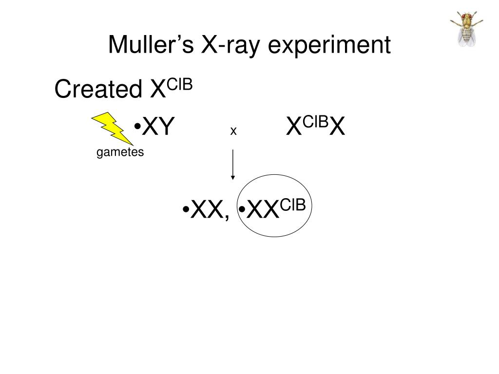 Muller's X-ray experiment