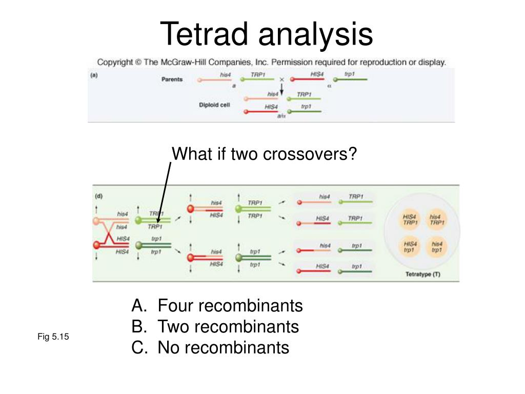 Tetrad analysis