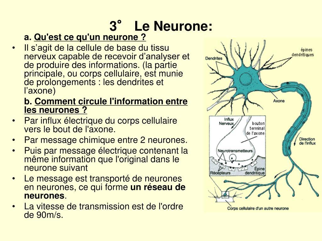 3° Le Neurone: