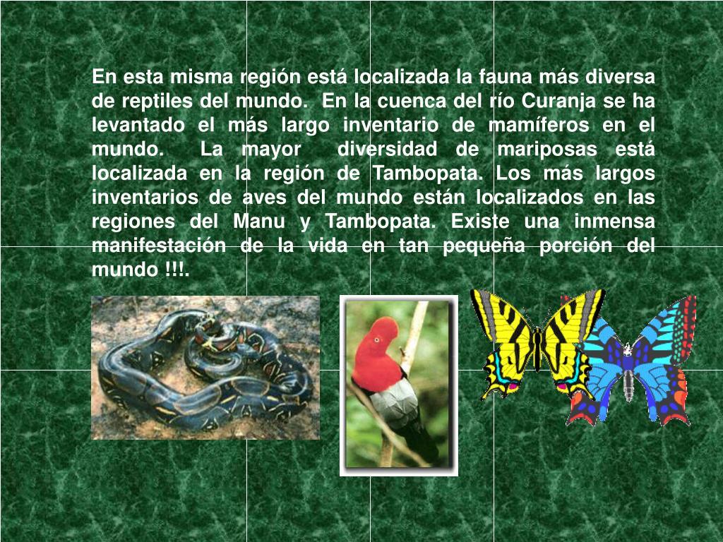 En esta misma región está localizada la fauna más diversa de reptiles del mundo.  En la cuenca del río Curanja se ha levantado el más largo inventario de mamíferos en el mundo.  La mayor  diversidad de mariposas está localizada en la región de Tambopata. Los más largos inventarios de aves del mundo están localizados en las regiones del Manu y Tambopata. Existe una inmensa manifestación de la vida en tan pequeña porción del mundo