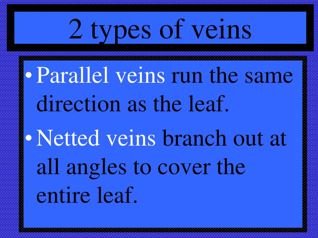 2 types of veins