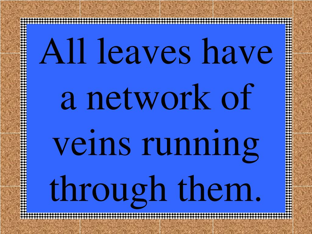 All leaves have a network of veins running through them.