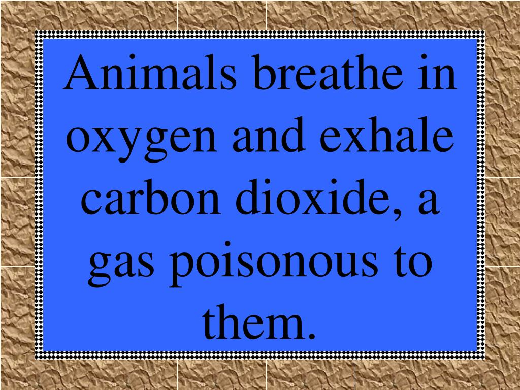 Animals breathe in oxygen and exhale carbon dioxide, a gas poisonous to them.