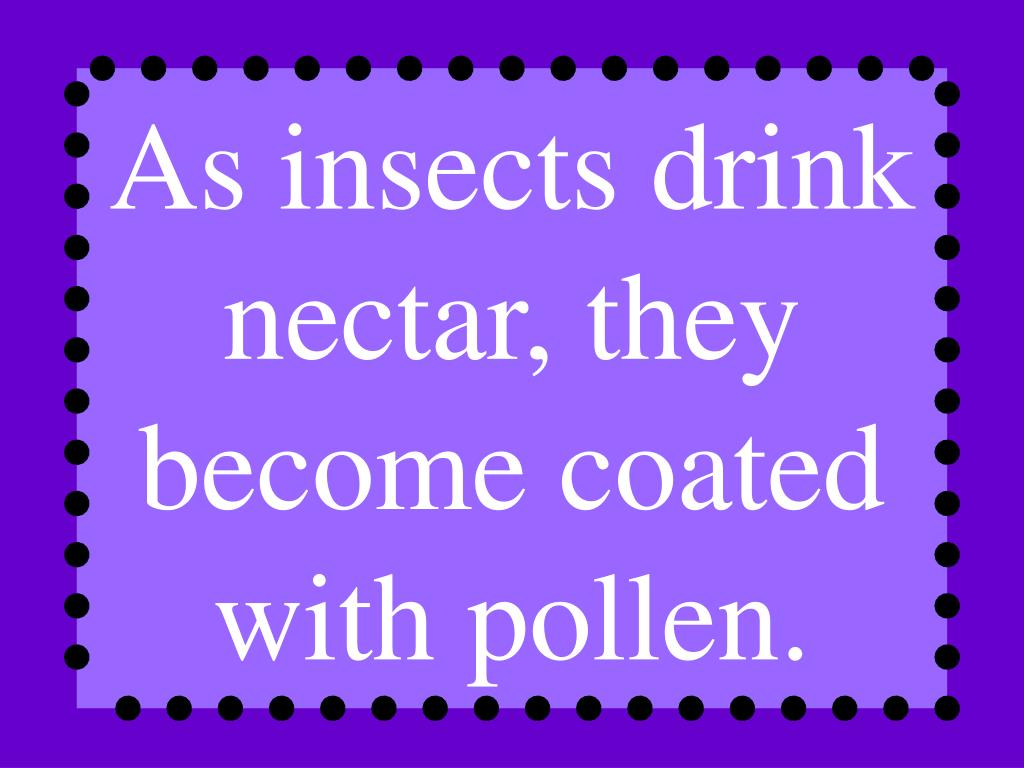 As insects drink nectar, they become coated with pollen.