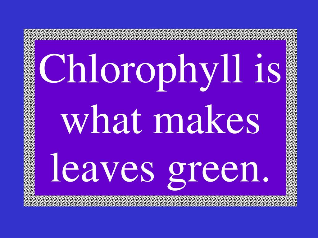 Chlorophyll is what makes leaves green.