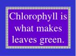 chlorophyll is what makes leaves green