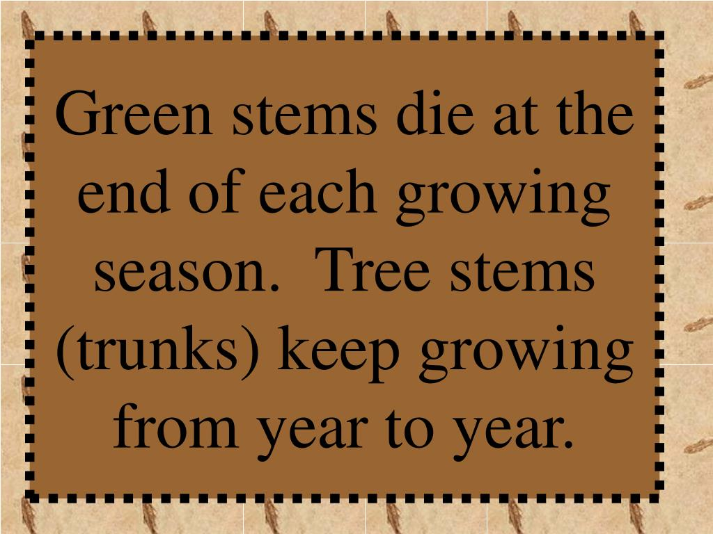 Green stems die at the end of each growing season.  Tree stems (trunks) keep growing from year to year.
