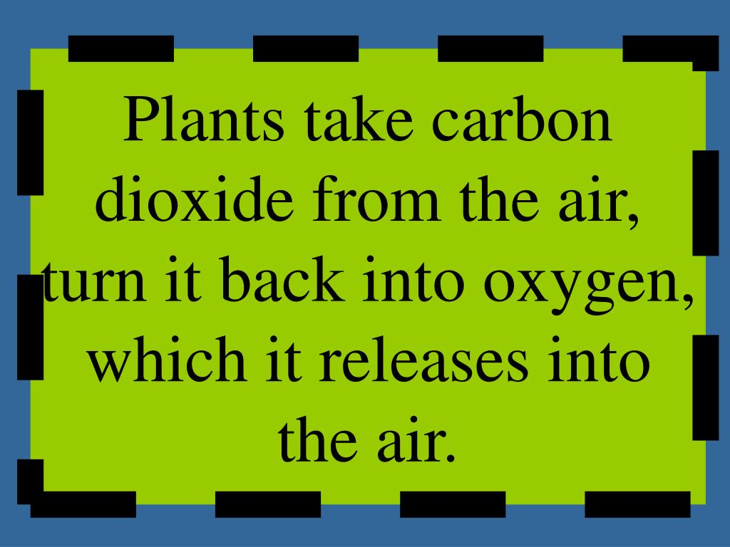 Plants take carbon dioxide from the air, turn it back into oxygen, which it releases into the air.