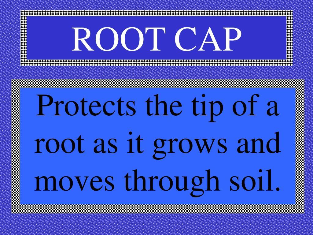 ROOT CAP