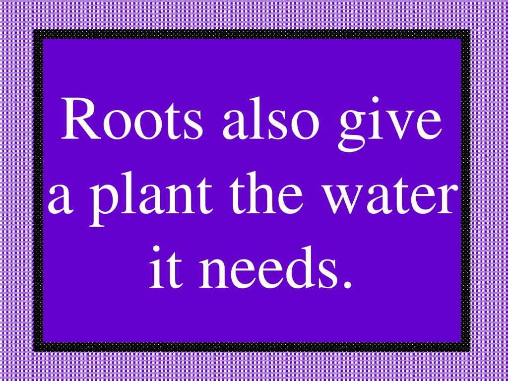 Roots also give a plant the water it needs.