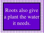 roots also give a plant the water it needs