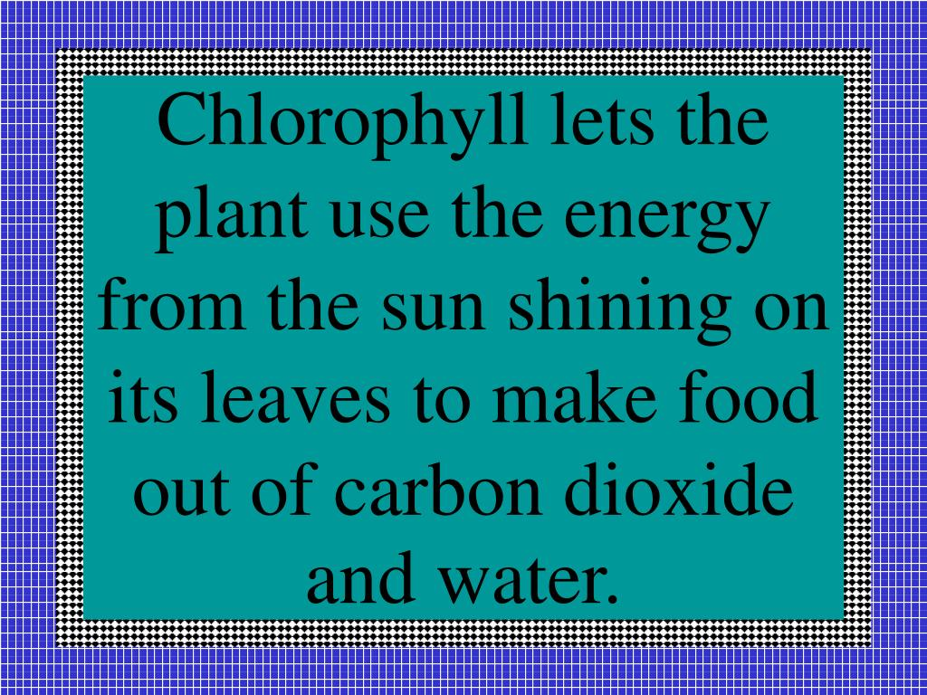 Chlorophyll lets the plant use the energy from the sun shining on its leaves to make food out of carbon dioxide and water.