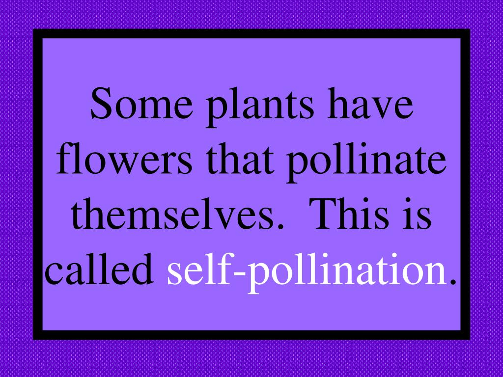 Some plants have flowers that pollinate themselves.  This is called