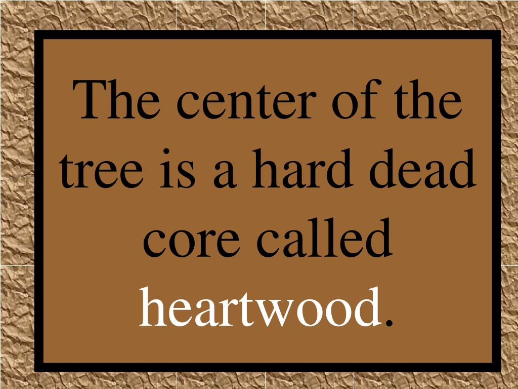 The center of the tree is a hard dead core called