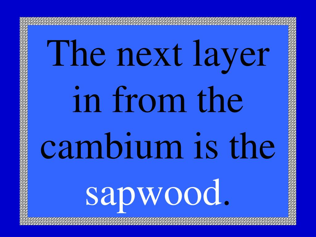 The next layer in from the cambium is the