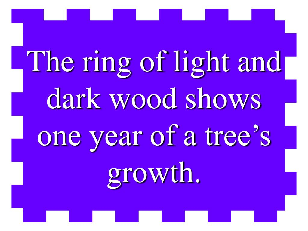 The ring of light and dark wood shows one year of a tree's growth.