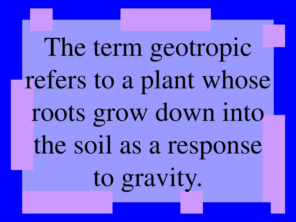 The term geotropic refers to a plant whose roots grow down into the soil as a response to gravity.