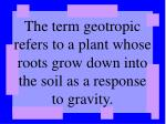 the term geotropic refers to a plant whose roots grow down into the soil as a response to gravity