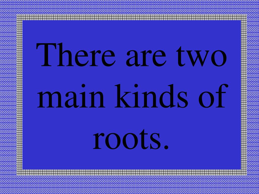 There are two main kinds of roots.