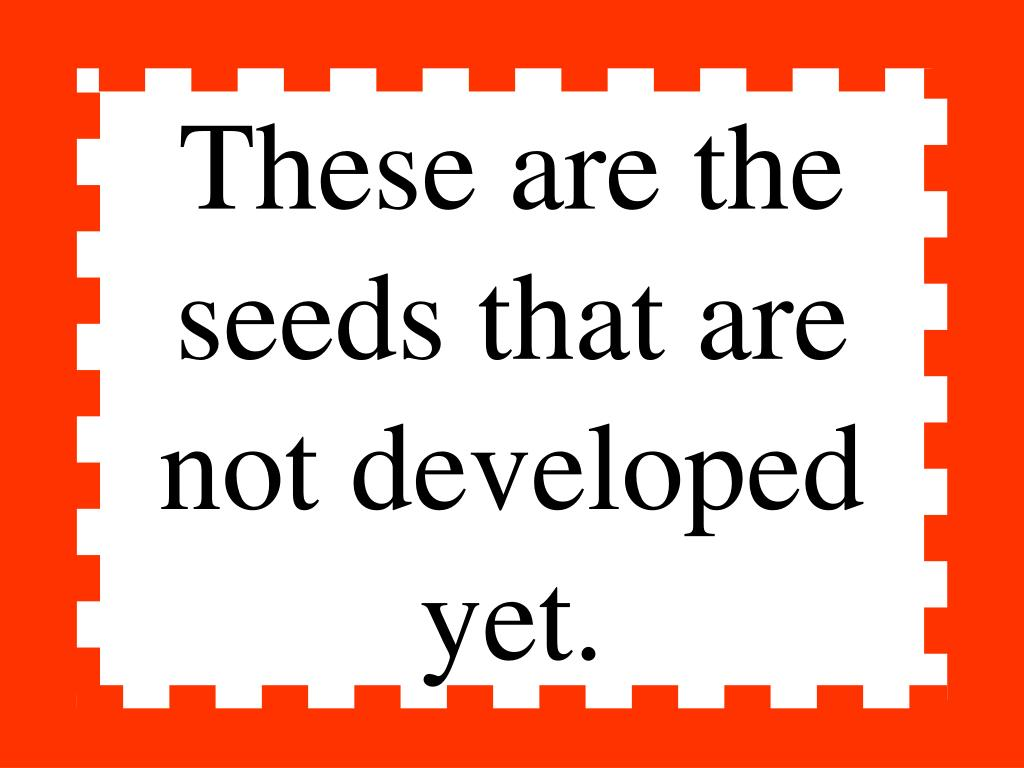 These are the seeds that are not developed yet.