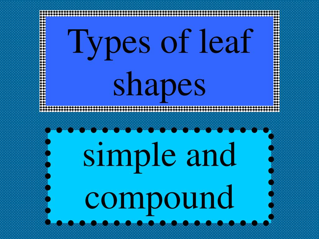 Types of leaf shapes