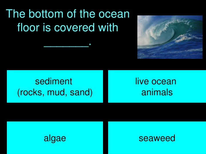 The bottom of the ocean floor is covered with _______.