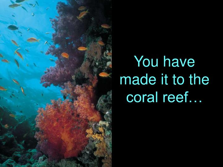 You have made it to the coral reef…