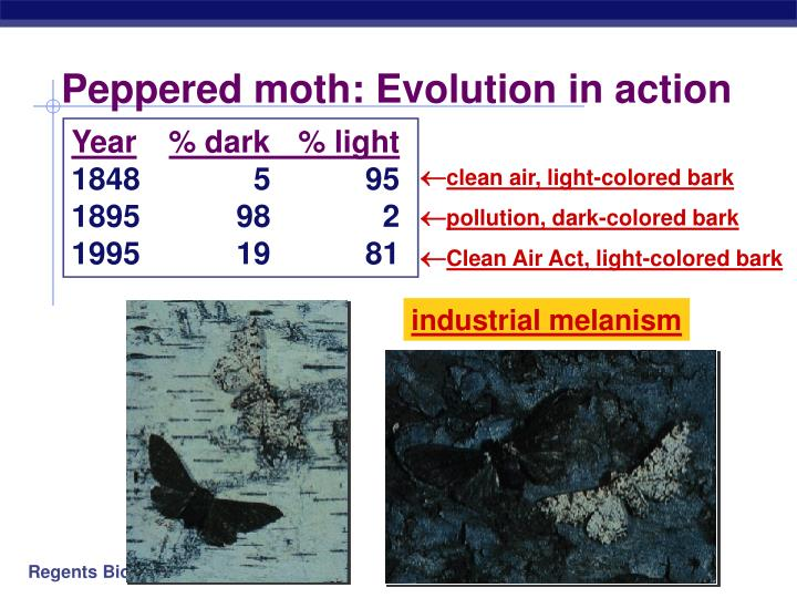 Peppered moth: Evolution in action