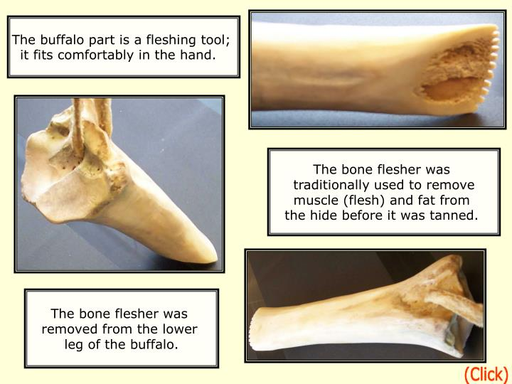The buffalo part is a fleshing tool;
