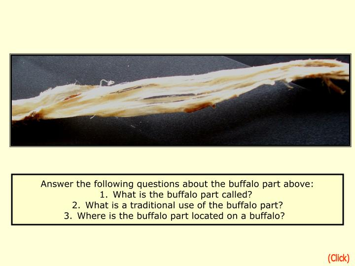 Answer the following questions about the buffalo part above: