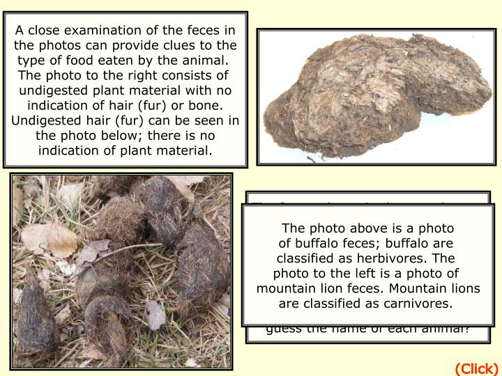 A close examination of the feces in