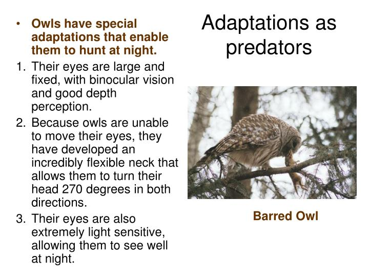 Owls have special adaptations that enable them to hunt at night.