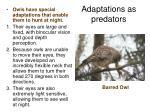 adaptations as predators