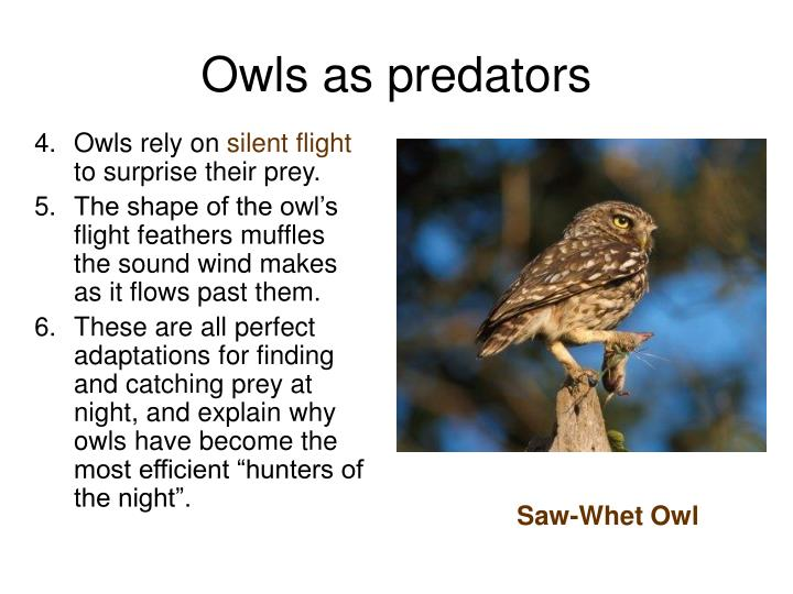 Owls rely on