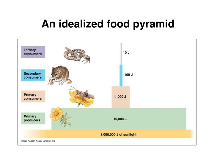An idealized food pyramid