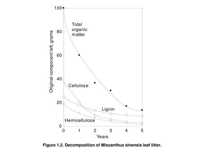 Figure 1.2. Decomposition of Miscanthus sinensis leaf litter.