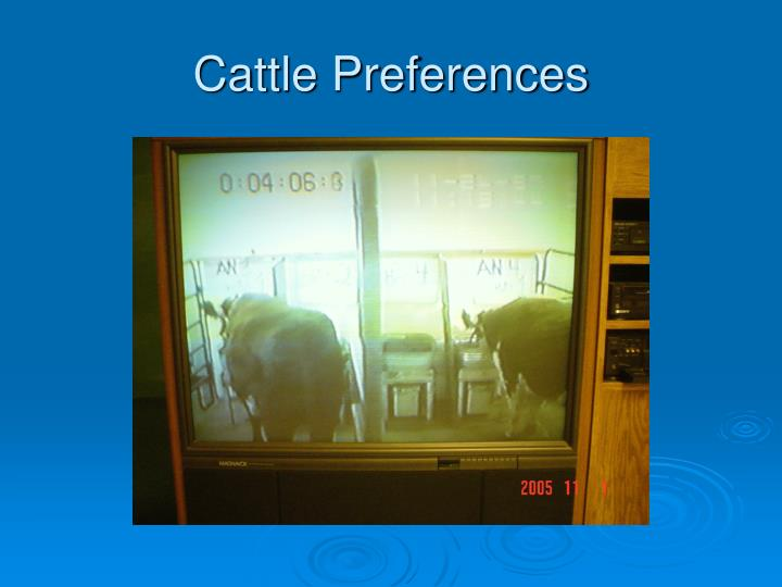 Cattle Preferences