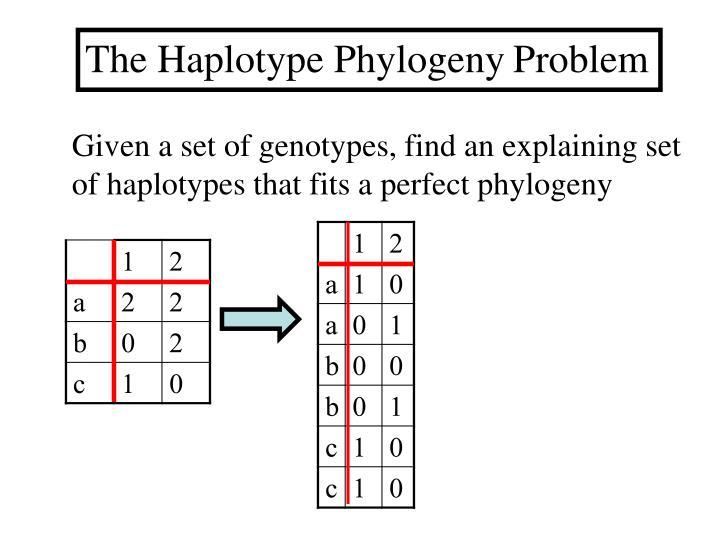 The Haplotype Phylogeny