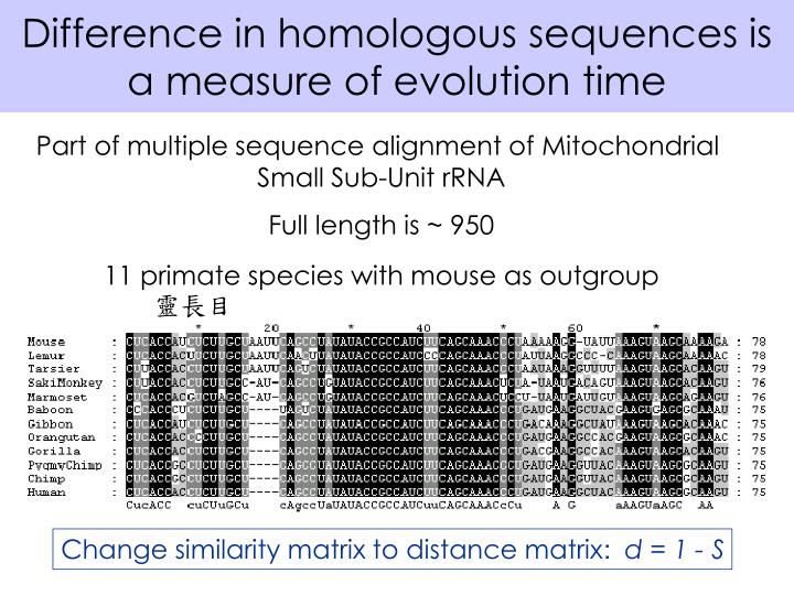 Difference in homologous sequences is a measure of evolution time