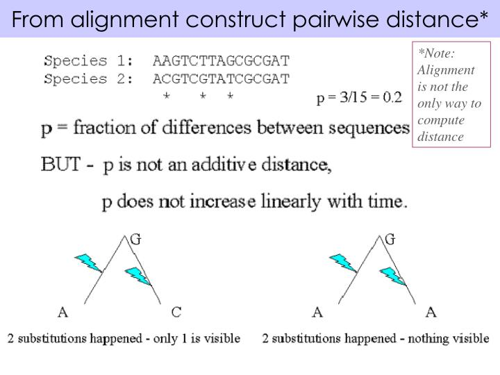 From alignment construct pairwise distance*