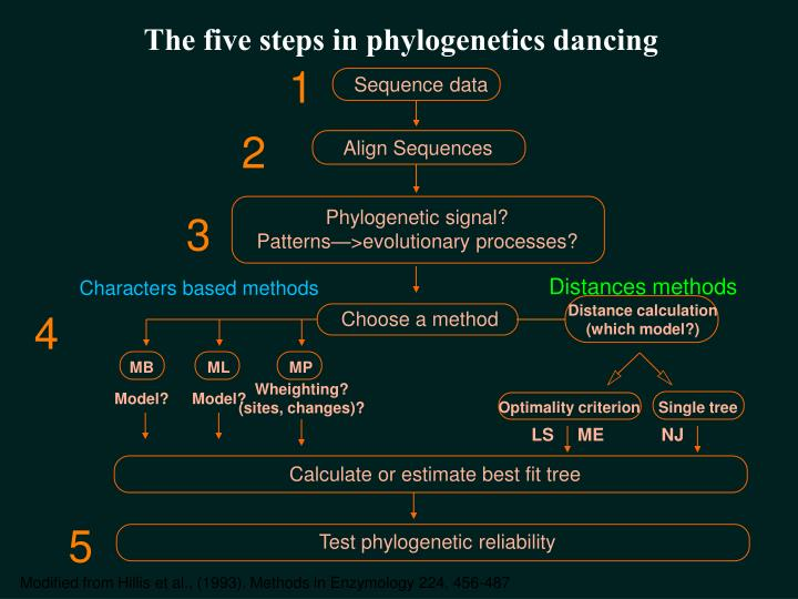 The five steps in phylogenetics dancing