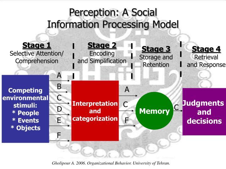 Perception: A Social