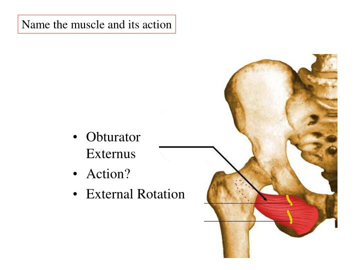 Name the muscle and its action
