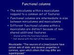 functional columns1