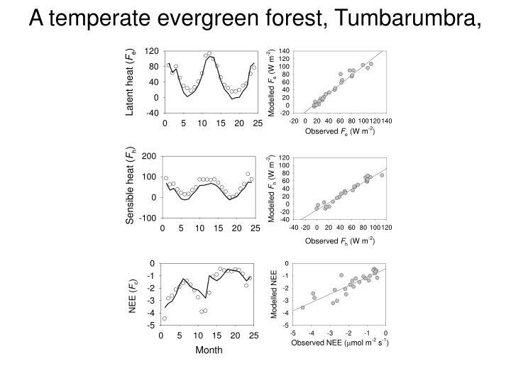 A temperate evergreen forest, Tumbarumbra, Australia