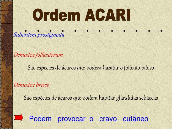 Ordem ACARI