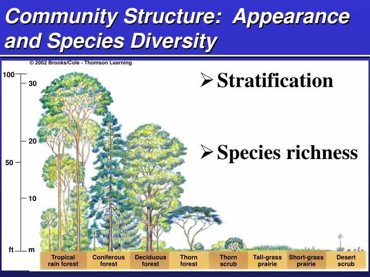 Community Structure:  Appearance and Species Diversity
